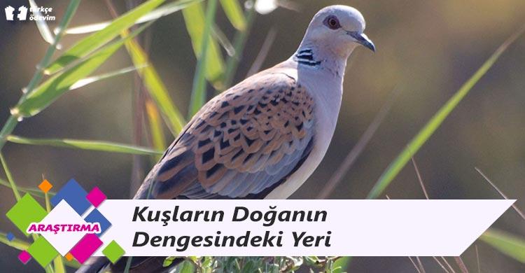 Kuşların Doğanın Dengesindeki Yeri
