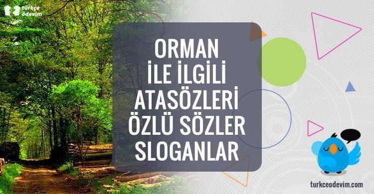 Orman ile İlgili Atasözleri Özlü Sözler Sloganlar