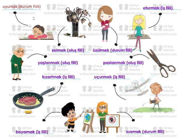7. Sınıf MEB Yayınları Bir Dünya Düşünürüm Metni Etkinlik Cevapları - İş-Oluş-Durum Fiilleri