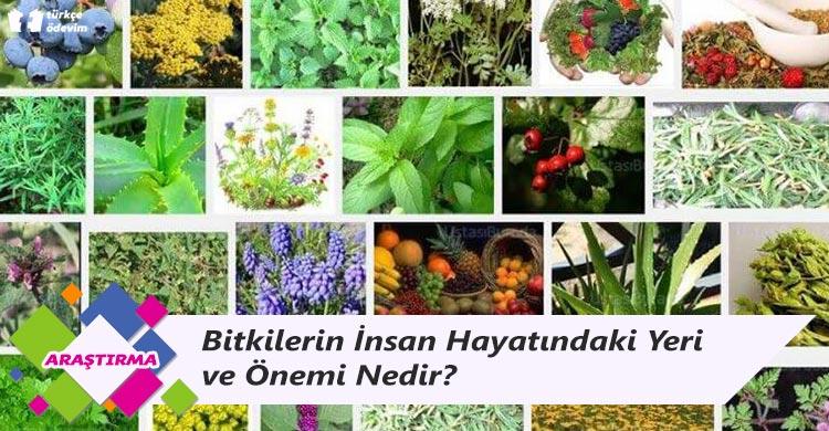 Bitkilerin İnsan Hayatındaki Yeri ve Önemi Nedir?