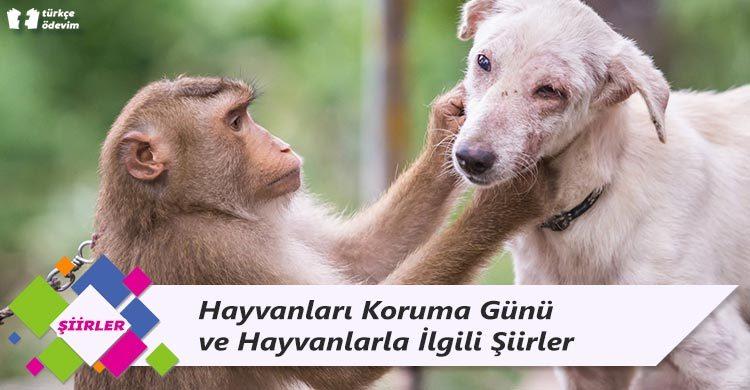 Hayvanları Koruma Günü ve Hayvanlarla İlgili Şiirler