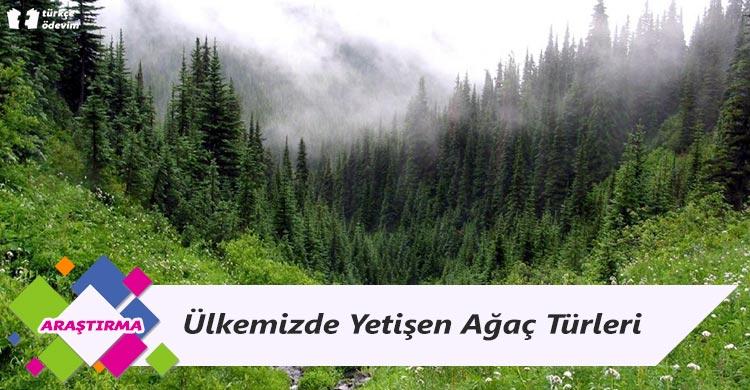 Ülkemizde Yetişen Ağaç Türleri