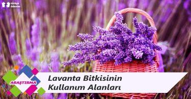 Lavanta Bitkisinin Kullanım Alanları