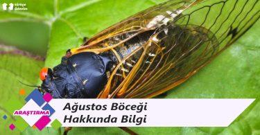 Ağustos Böceği Hakkında Bilgi