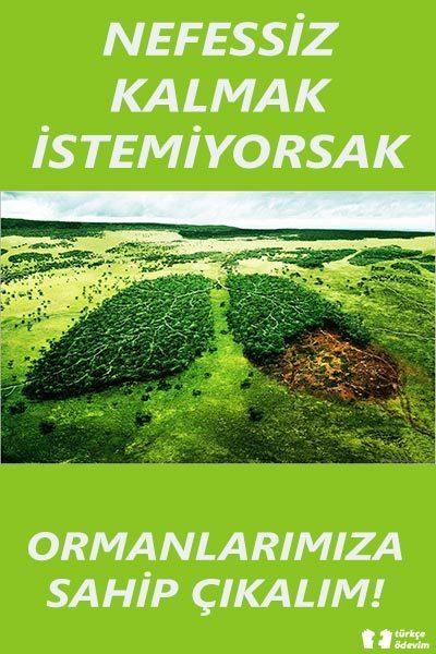 Ormanın Önemini Anlatan Afiş Örneği